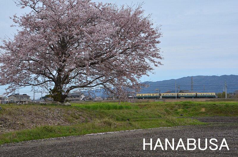 Hanadsc_0269