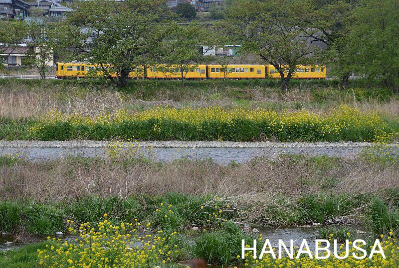 Hanah280420dsc_0867_2